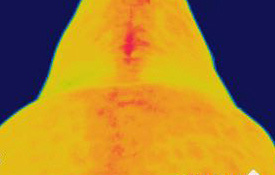 13 thermographyb